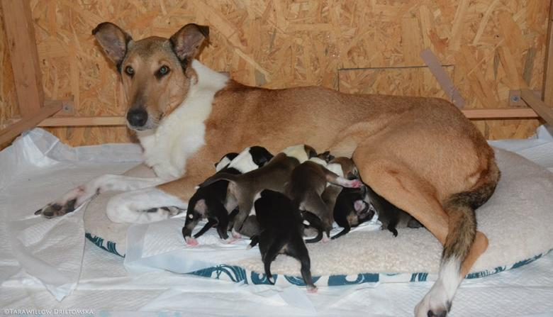 Puppies were born in the Slovak Republic after the Brontes