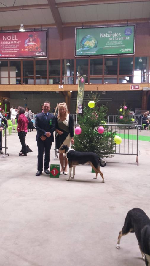 Sheepdogs Continental Winner Show in LIBRAMONT (Be)