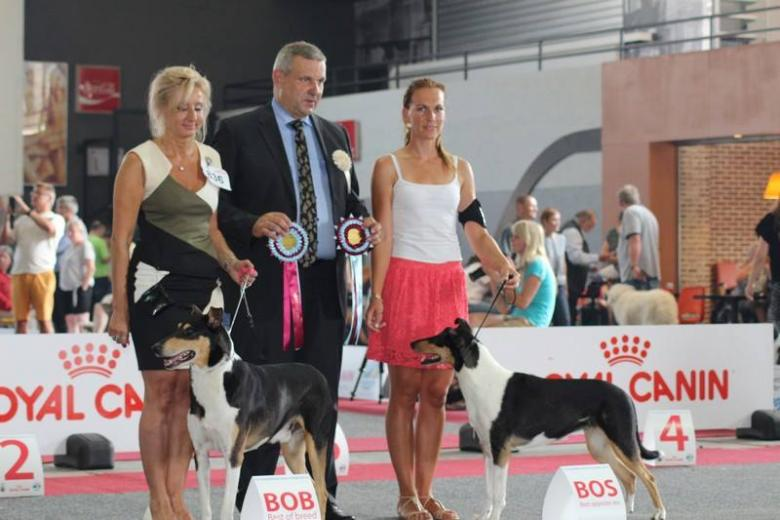 EUROPEAN DOG SHOW BRUSEL 2016