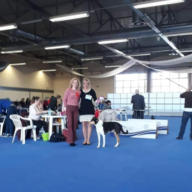 International dog show CELJE - Slovenia