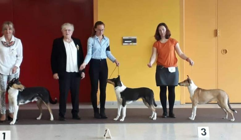 National dog show Ostrava