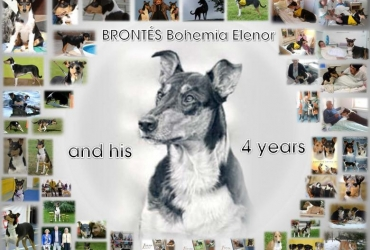 Brontés and his 4 yers